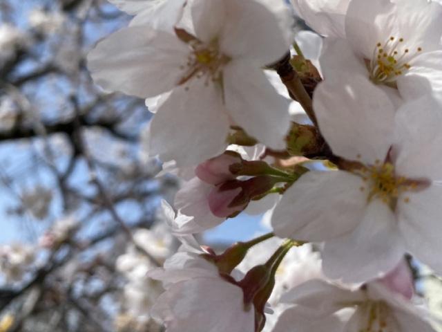 春満喫するなら今です